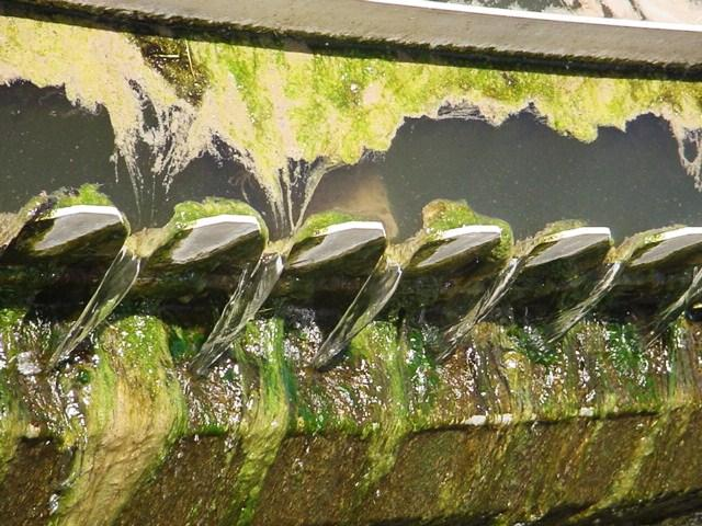 Rong rêu phát triển trong tháp hạ nhiệt