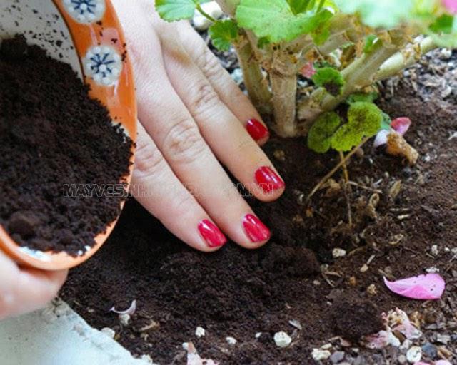 cách diệt kiến lửa trong vườn rau