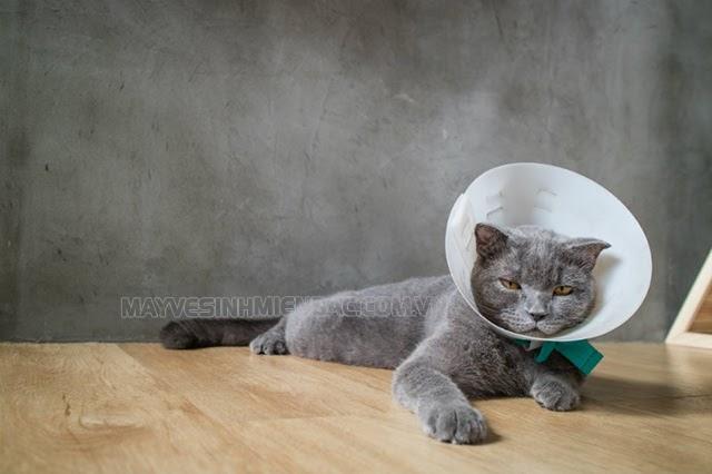 chăm sóc sức khỏe kỹ càng cho mèo bị bệnh