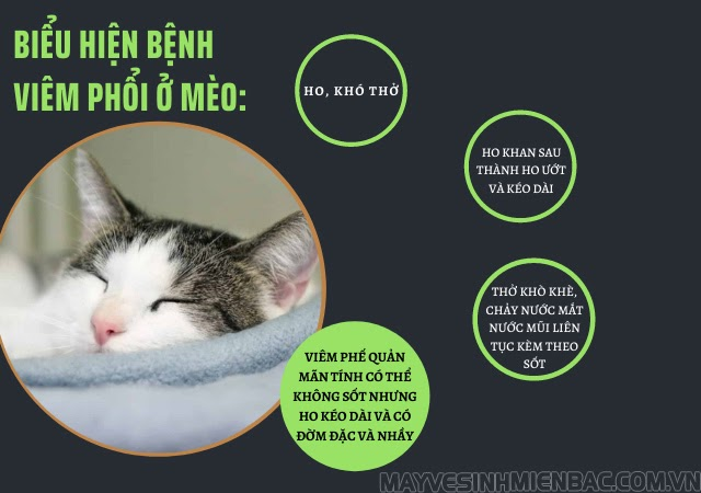 mèo bị ho khạc như hóc xương biểu hiện bệnh viêm phổi