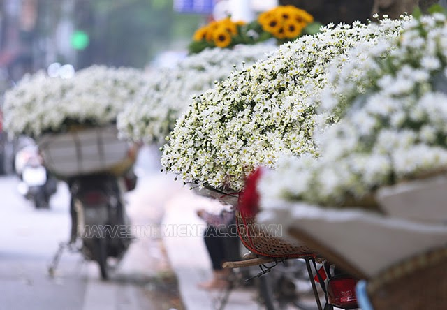mùa đông có hoa gì đặc trưng