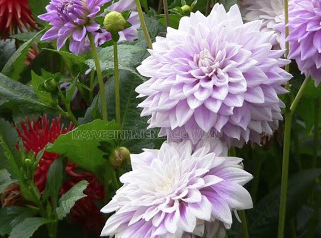 mùa đông có những loại hoa gì