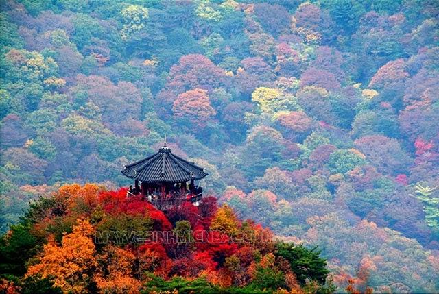 mùa thu hàn quốc bắt đầu từ tháng mấy