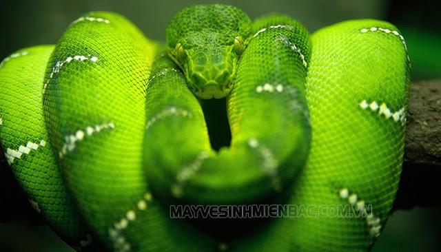 nằm mơ thấy rắn xanh đánh con gì