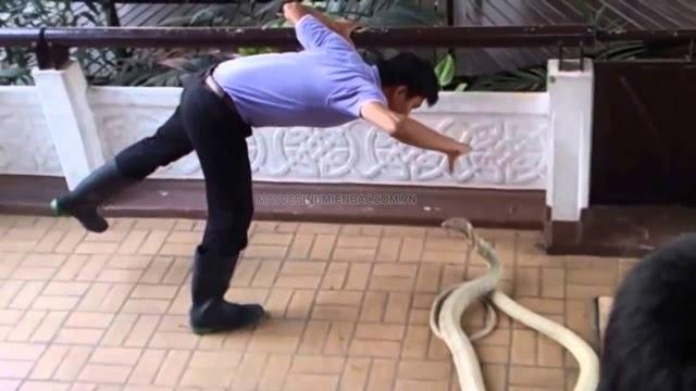 nằm mơ thấy rắn màu trắng cắn