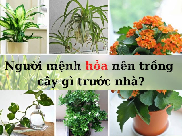 Người mệnh hỏa nên trồng cây gì trước nhà để lấy may, xua tan hung khí?
