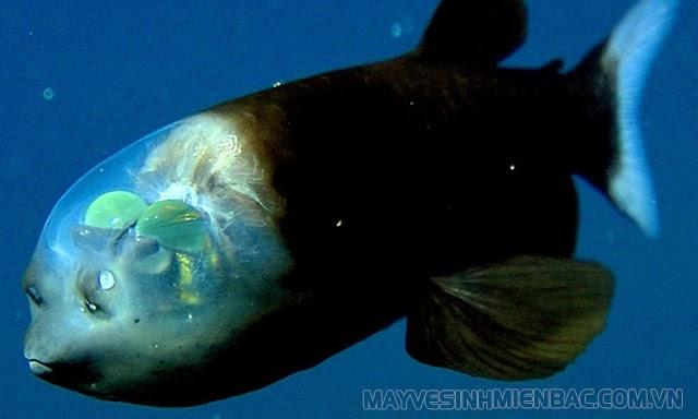 các sinh vật ở đại dương